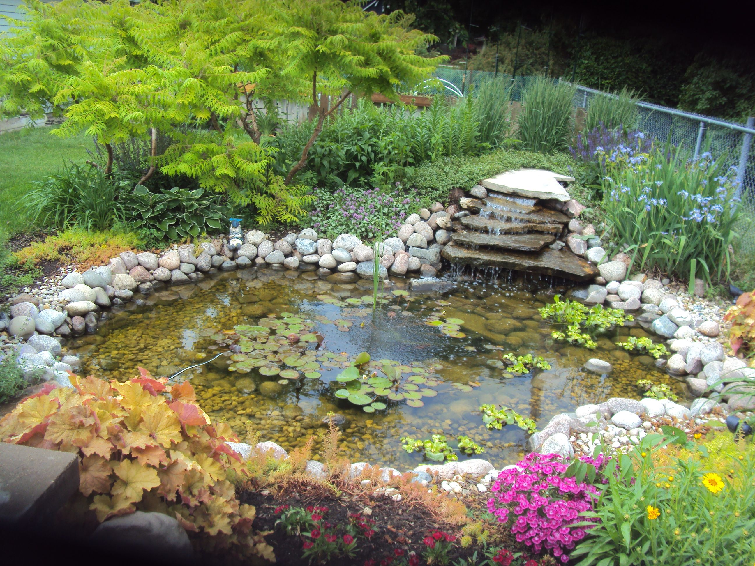 1000 images about Water Gardens on Pinterest Gardens Backyard