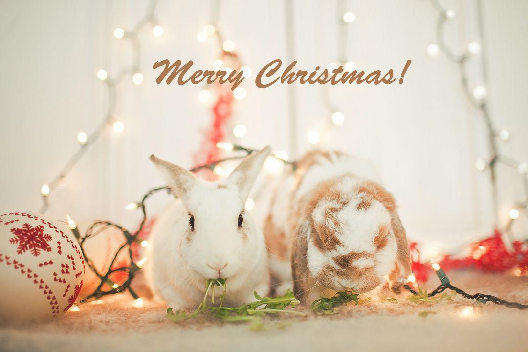 Merry Christmas Bunny Merry Christmas Christmas Bunny Merry Christmas To All