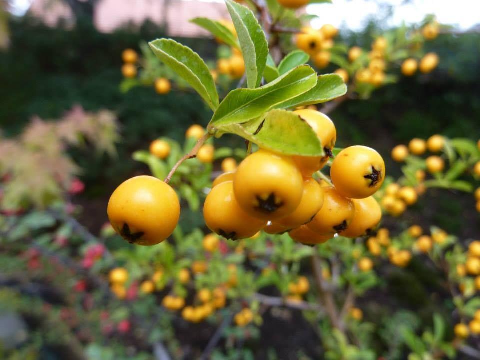 Pin On Flora V Trees