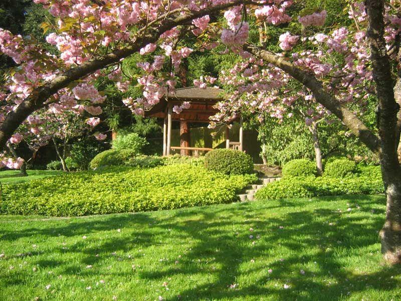 The Japanese Garden In The University Of Washington Botanic Gardens At The  Washington Park Arboretum