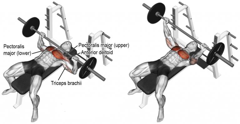Flat Bench Press Flatbenchpress Bench Press Workout Guide Muscle Building Workouts