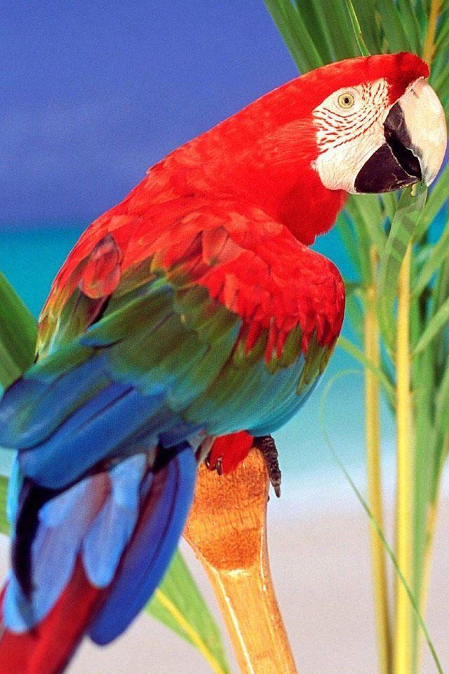 Pin De Mimosa Jojo En Shiver Me Timbers Aves De Colores Loros Pajaros De Colores