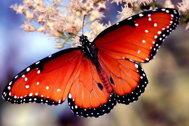 через объектив: Красивые фотографии бабочек   Фотографии