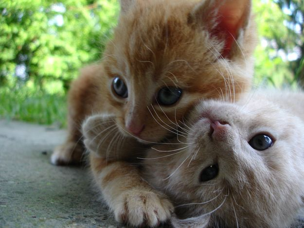 The 25 Most Important Kitten Hugging Techniques Animals Cat Cuddle Baby Animals