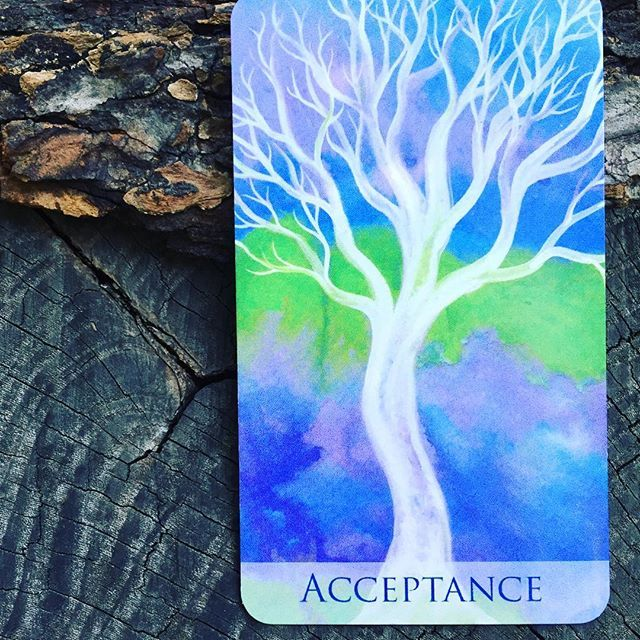 What message does this card have for you at this time? 💚 . . #SoulTrees #soultreesoraclecards #trees #acceptance #spiritjunkie #supersoulsunday #beopen #acceptyourself #honoryourself #now #beinthemoment #thepowerofnow #thistooshallpass
