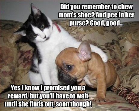 Love Is Puppies And Kittens Memes Google Search