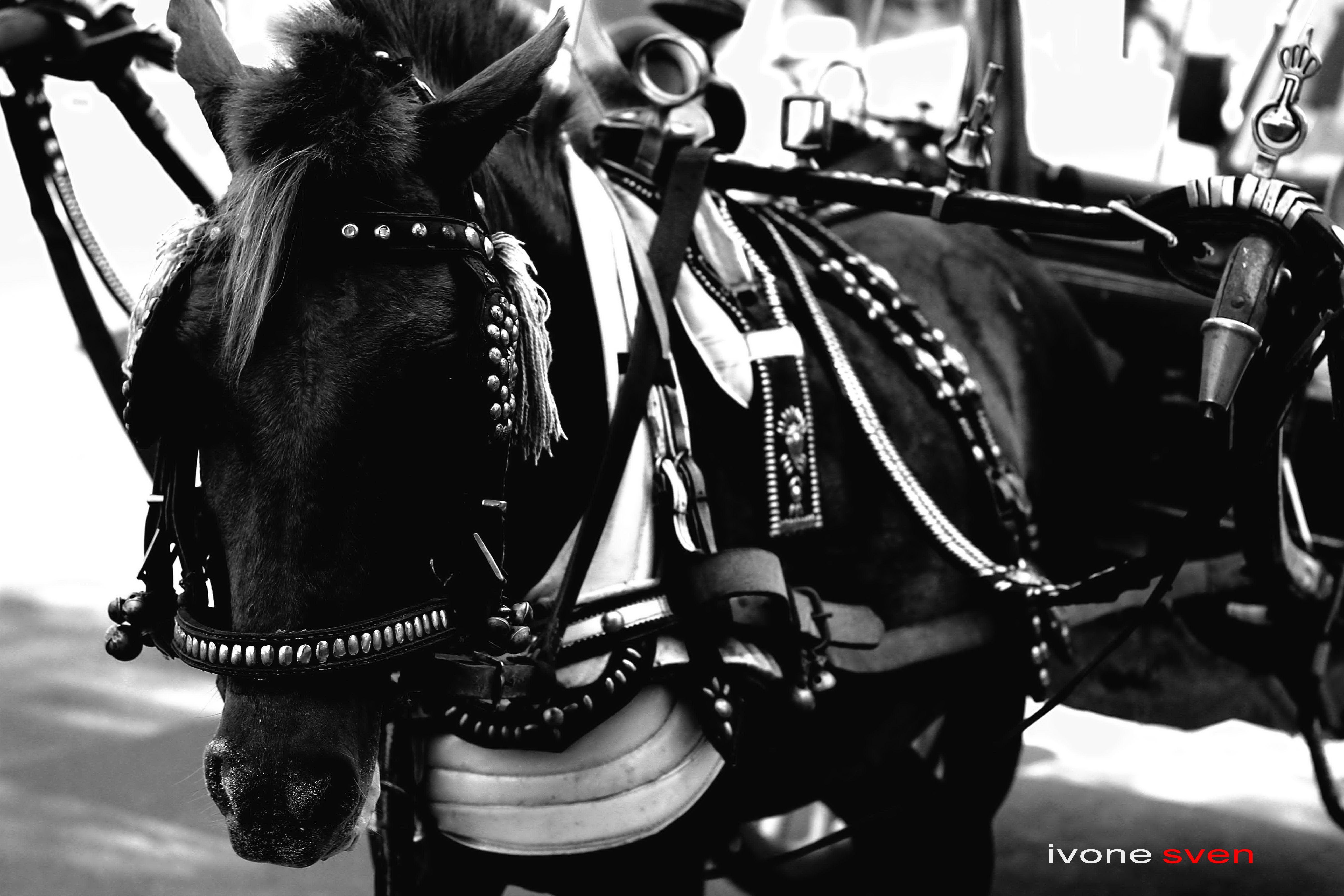 The Kuda