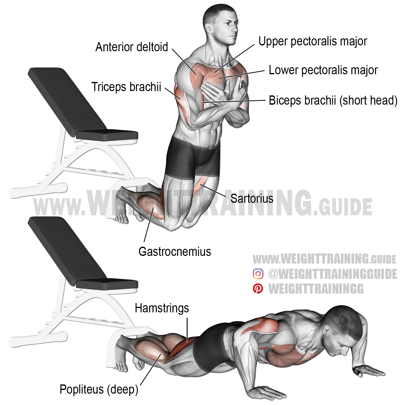 Inverse Leg Curl Exercise Instructions And Video