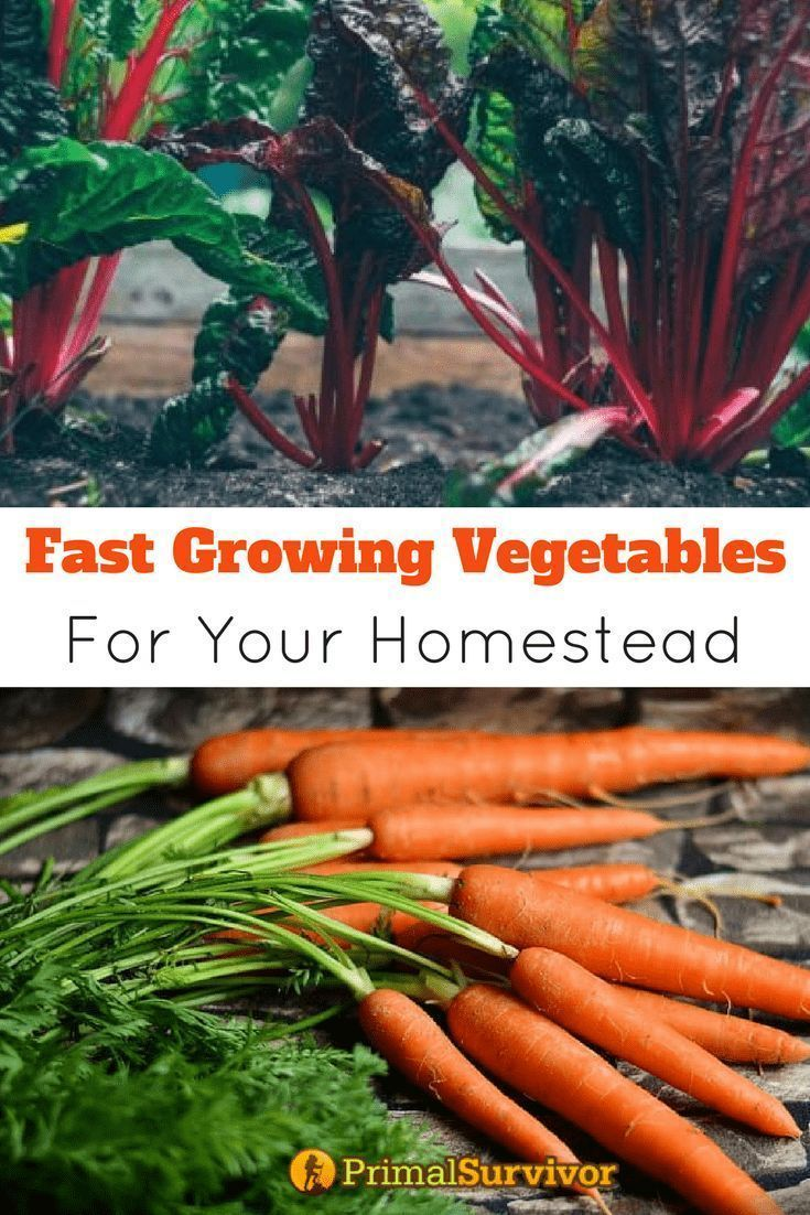 11 Fast Growing Vegetables For Your Homestead Fast 400 x 300