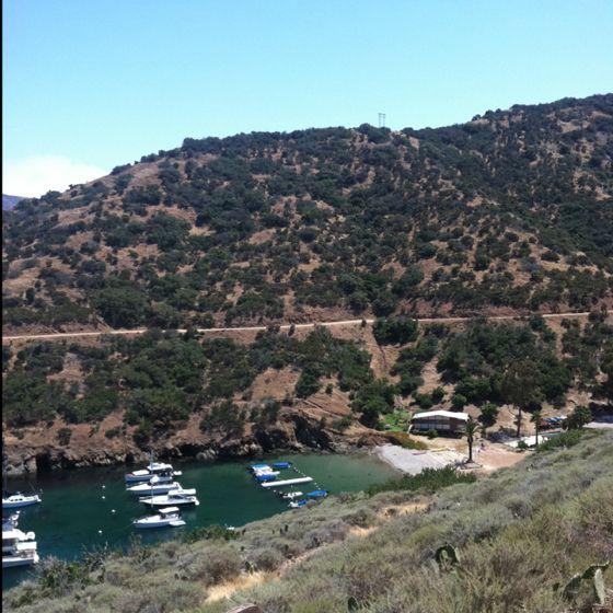 Catalina island matchmaking