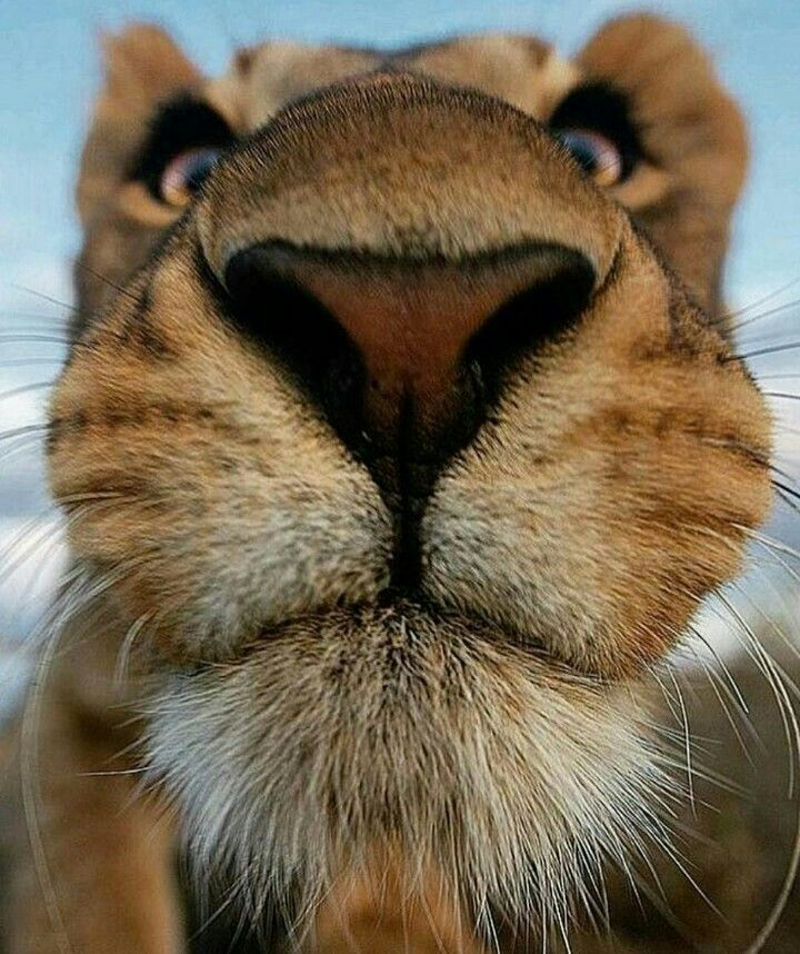 The nose knows..... | Animal noses, Animals beautiful, Animals