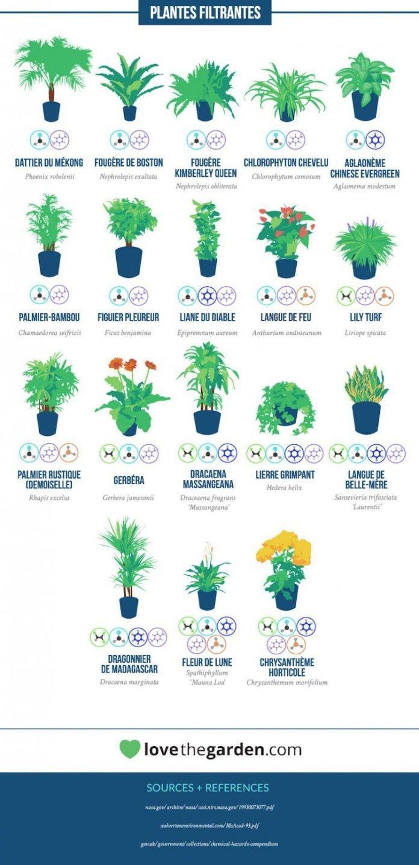 La liste de plantes d'intérieur antipollution de la NASA