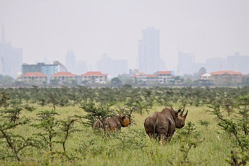 Nairobi, Kenya #JetsetterCurator   - Explore the World with Travel Nerd Nici, one Country at a Time. http://TravelNerdNici.com