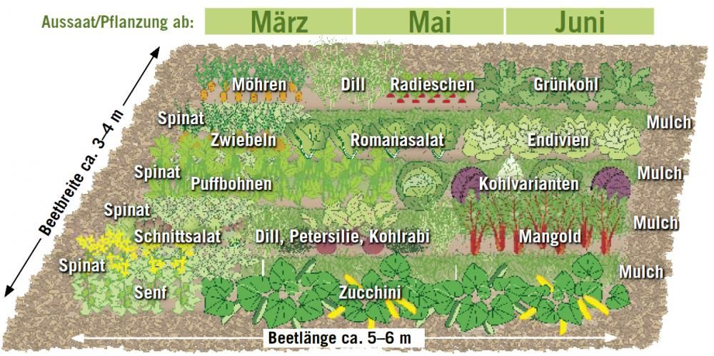 Mischkultur im Gemüsebeet #kräutergartenpalette
