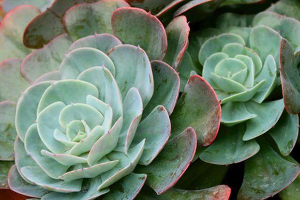 Cómo crear un jardín de suculentas