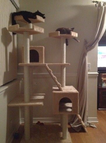 cat condo for large cats u2013 72u2033 large cat tower tree elegant catsincare