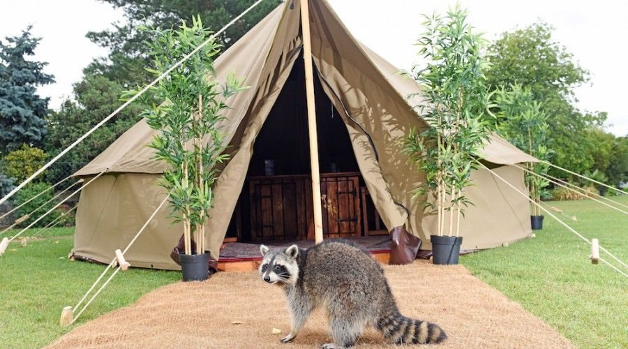 Chessington add more Safari Tents to their Park - Holiday Parks Management. Chessington World of & Chessington add more Safari Tents to their Park - Holiday Parks ...