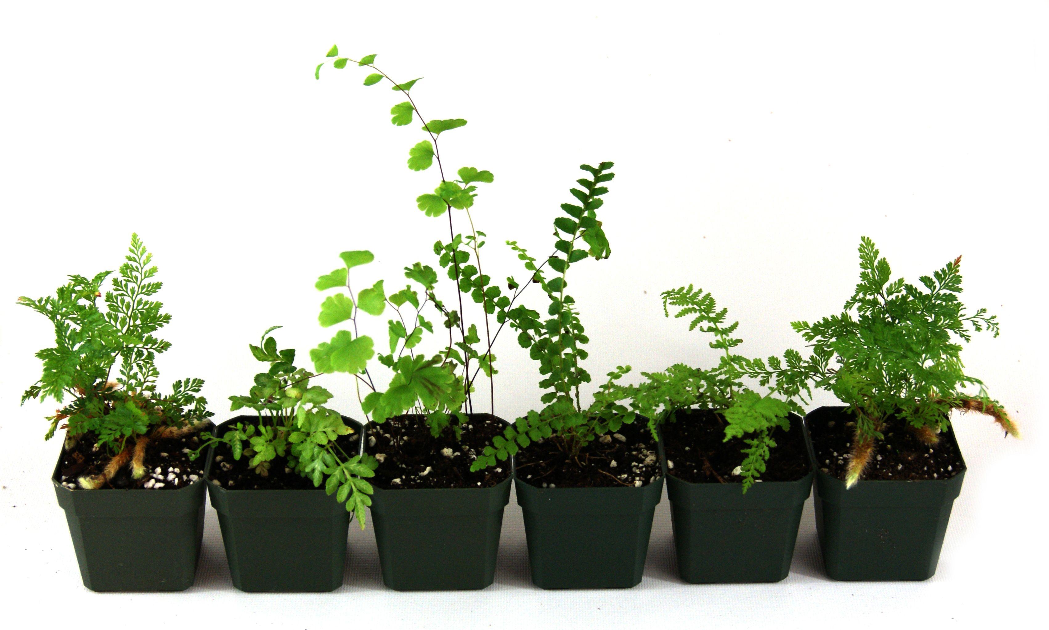 Terrarium Plant Bundle 10 Plants Regular Price 44 90 34 99