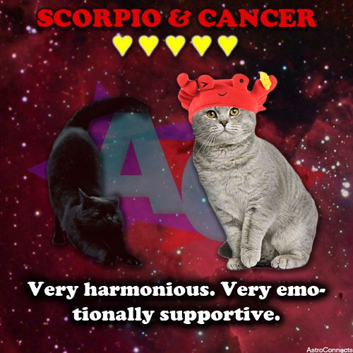 #Scorpio & #Cancer in #LOVE! We have much more #compatibility info if you register here: astroconnects.com #astrology #dating #cats #horoscope #zodiac