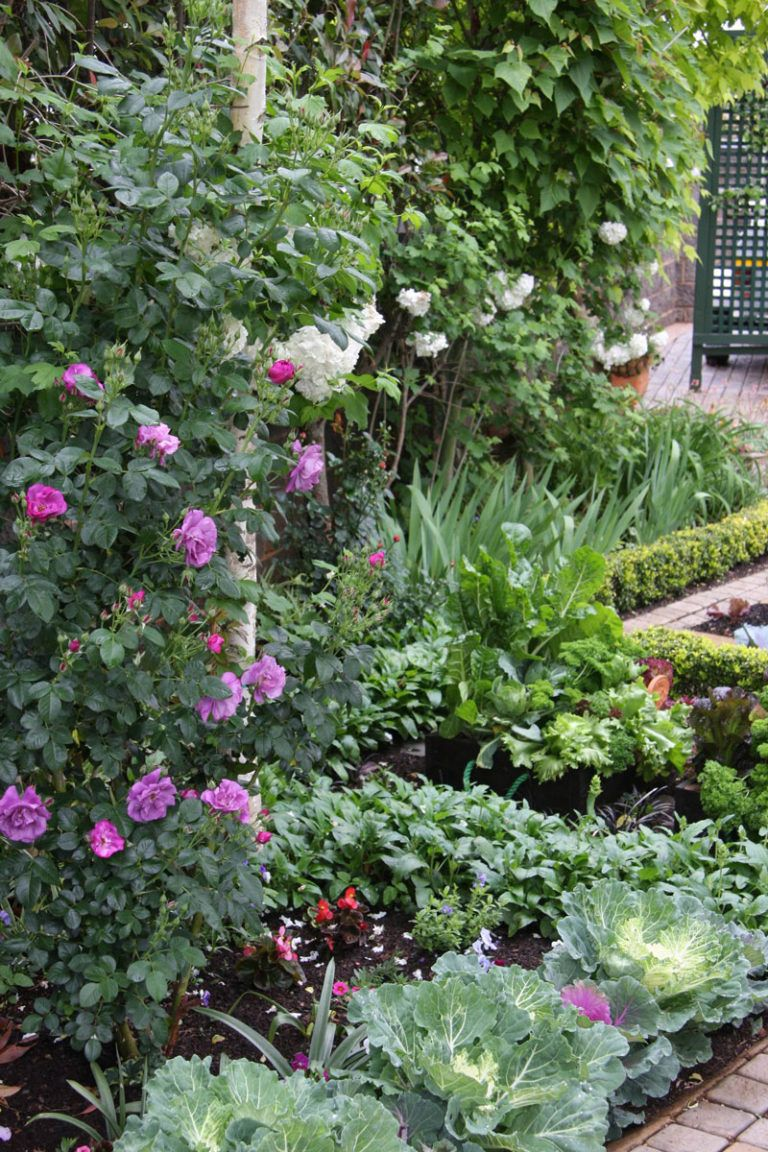 ed388bfe6bd9bf8bfd5fdd8b1122410f - Pictures Of Rose Gardens With Companion Plants