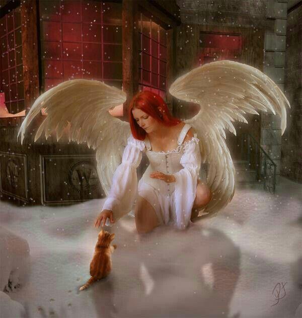 Пин от пользователя Natali на доске Ангел и кот   Ангел ...