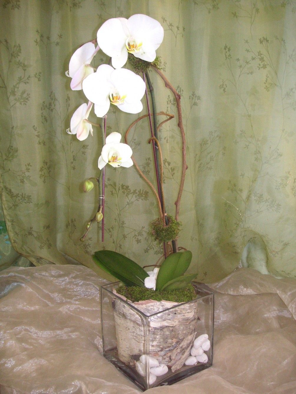 White phalaenopsis orchid plant in glass cube with birch bark, white rocks, and kiwi branches $115.00