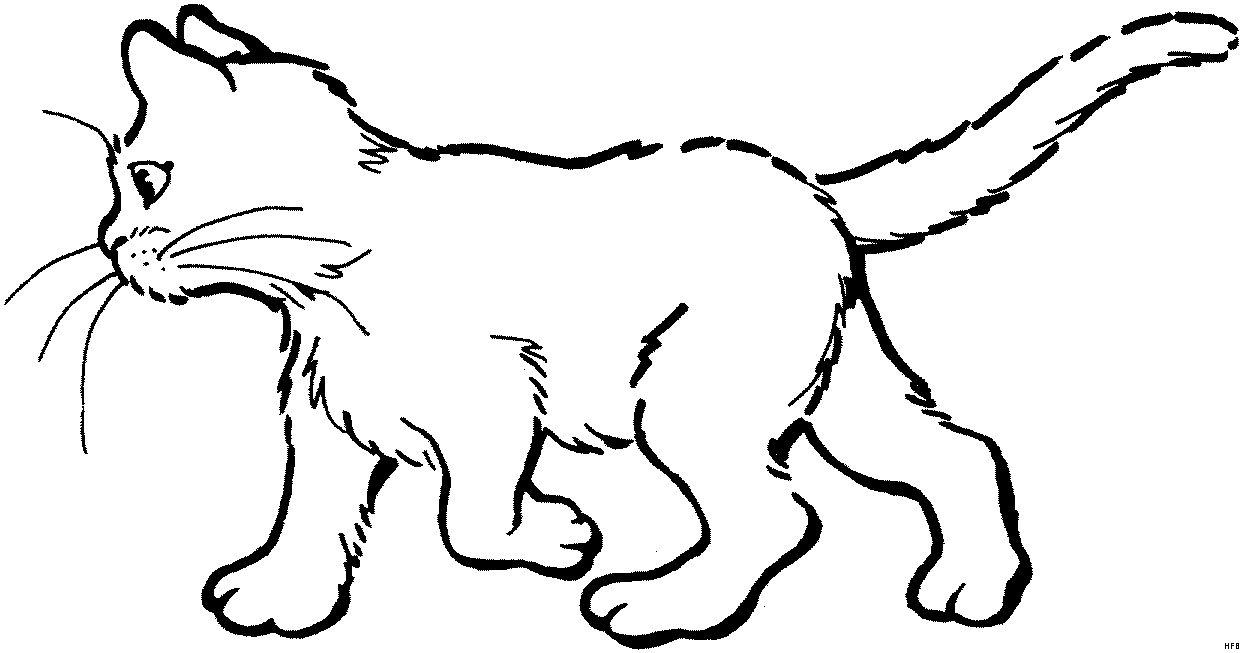 Malvorlagen Katzen Drucken Kucing