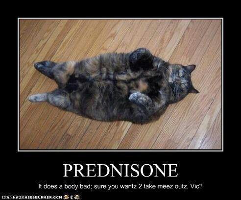 Got Prednisone...