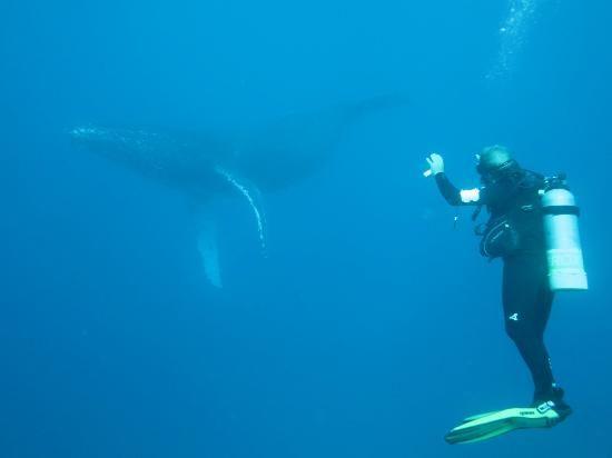 Kona Diving Company >> Kona Diving Company Kailua Kona Kona Coast Kona Island