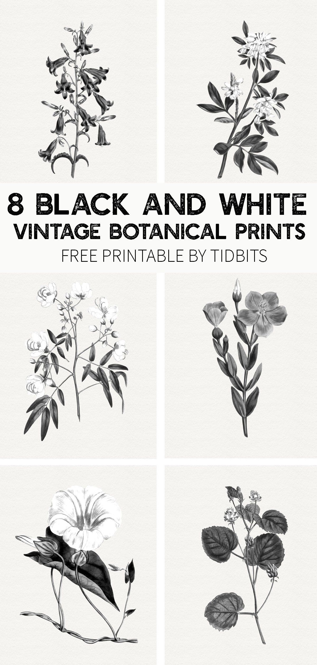 Beautiful And Minimalistic Wall Art Grab Your Free Black And White