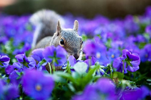 Squirrel Eating Purple FLowers At Epcot