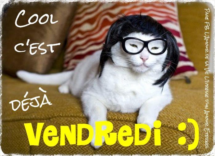 Cool c'est déjà vendredi :) #vendredi chat deguisement bon vendredi humour | vendredi | Pinterest