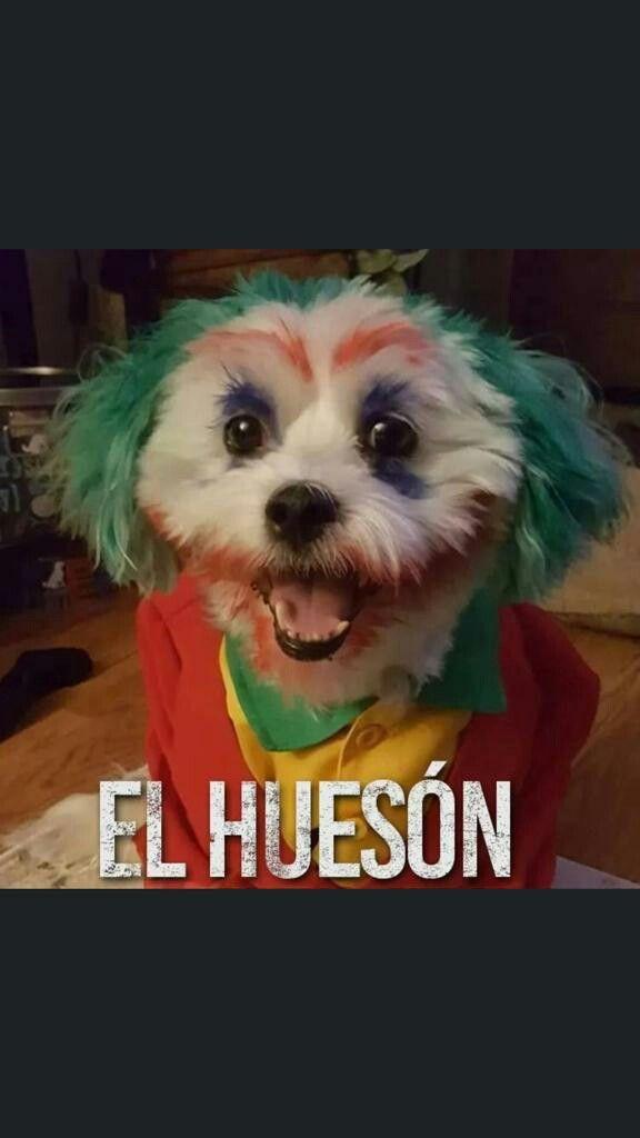 Pin De Zuzuma En Memes Mamados V Memes Divertidos Memes De Perros Chistosos Humor Divertido Sobre Animales