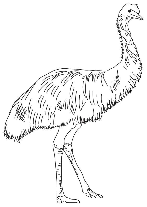 Outback Australian Animals Coloring Pages Coloring Pages