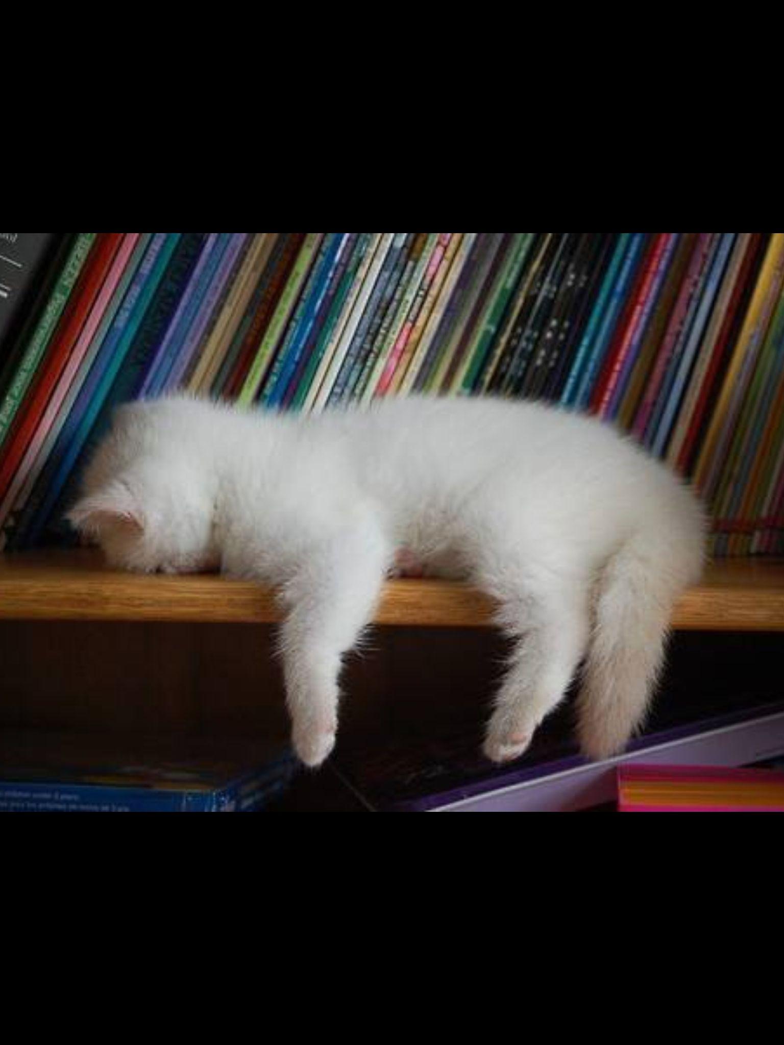Dicono che un sonnellino pomeridiano faccia bene alla salute ... meglio esagerare. #animali #felini #gatti #mici #cuccioli