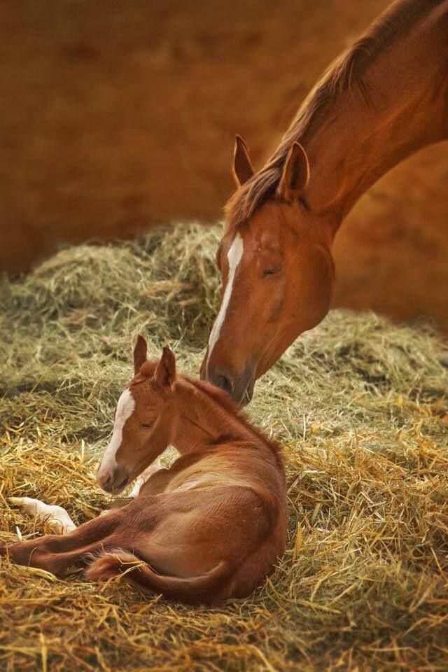 Pin by راندة زهران on أمم أمثالكم Horses, Baby horses