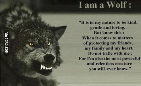 Don't mess with wolves