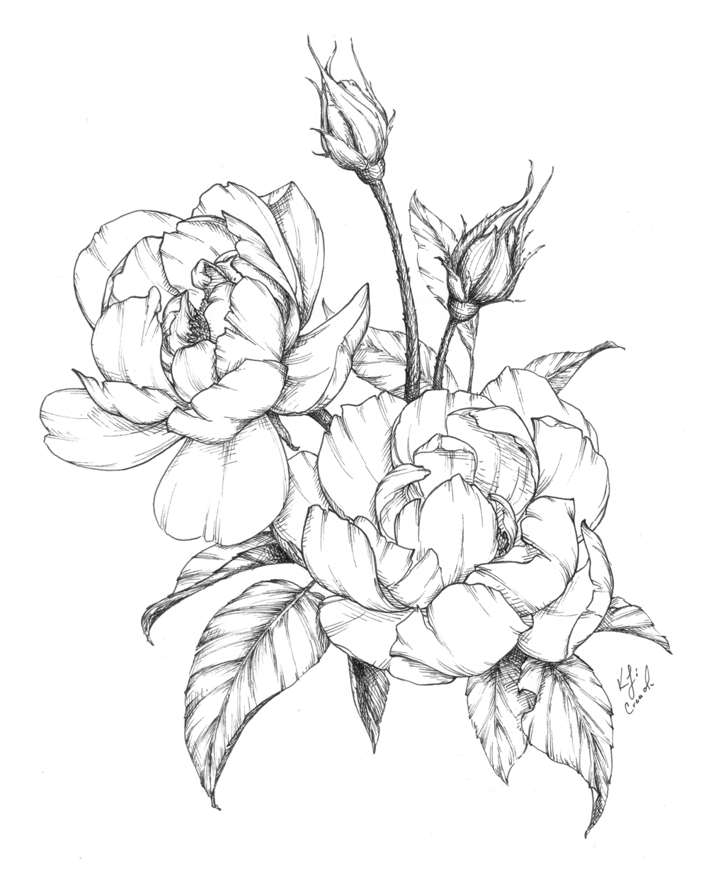 Flower Drawings Spring 2019 Blushed Design Flower Line Drawings Flower Drawing Peony Drawing