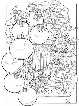 Обои и плакаты РАСКРАСКИ ВКонтакте трафареты Pinterest - copy coloring pages of vegetables