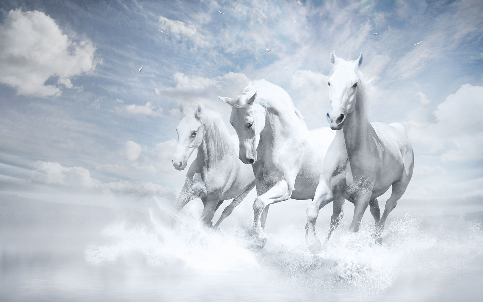 Pin By Wallpaperlive On White Horse Wallpaper Horses White Horses
