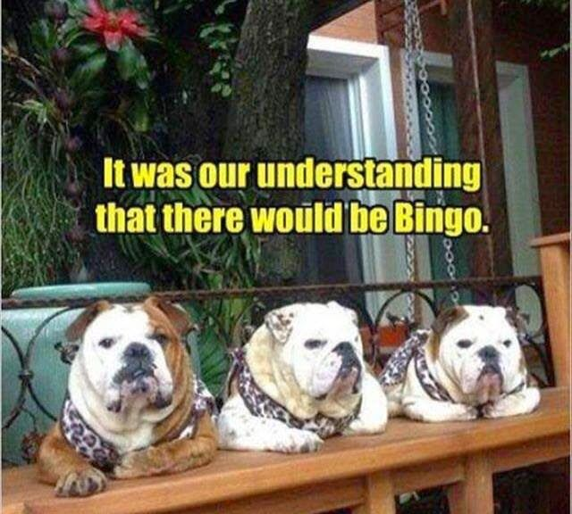 Funny Bingo Bulldogs Funny Animal Pictures Funny Animals