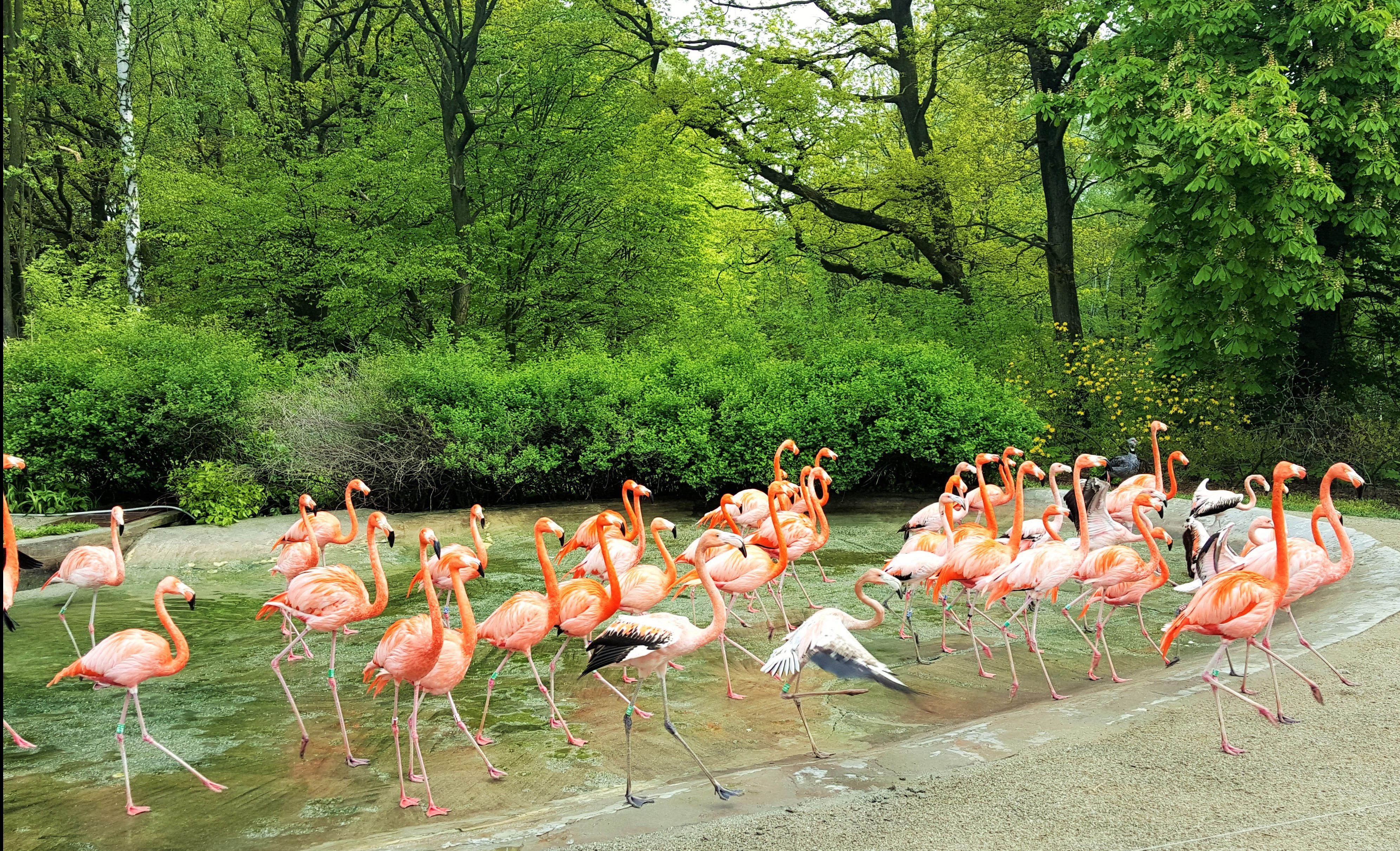 Zoo Ostrava Miejsce Przyjazne Dzieciom