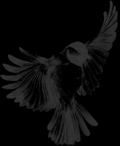 I D Love This As A Tattoo Bird Drawings Birds Tattoo Chickadee Tattoo