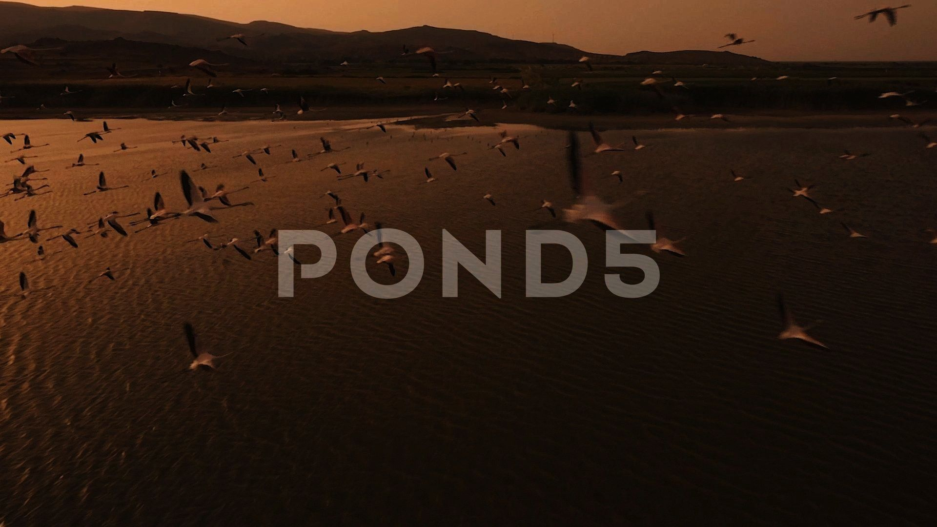 Drone Fly Through Stock Footage DroneSwarmFootageFlamingoFlamingo Swarm  Drone Fly Through Stock Footage DroneSwarmFootageFlamingo Graphic Design  Graphic Design Ideas...