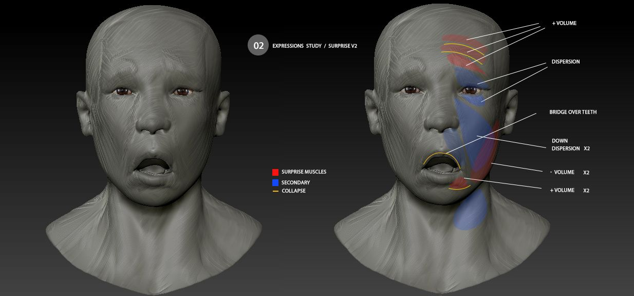 anatomy studies facial expressions / angry | 3D by the frisbeeman ...