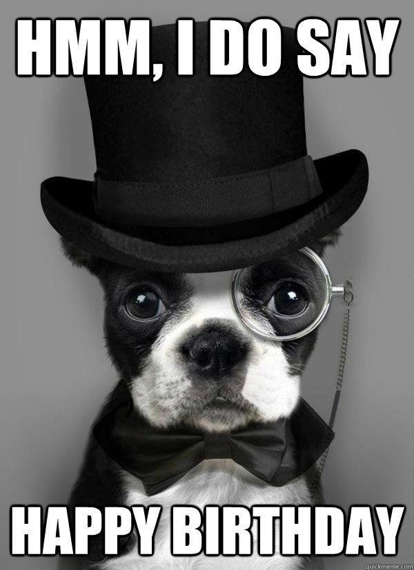 Pin By Jason Gozo On Birthday Wishes Dapper Dogs Boston Terrier Animals