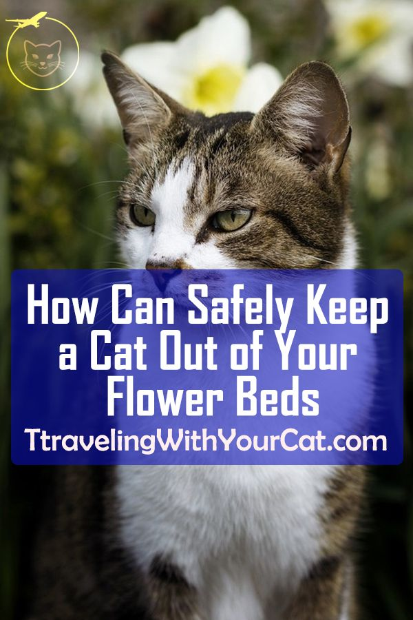 How You Can Safely Keep a Cat Out of Your Flower Beds and ...