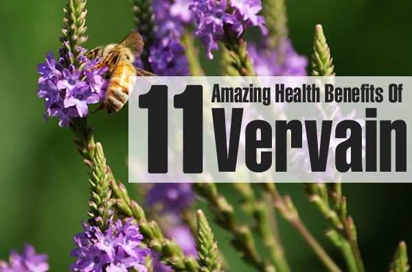 Vervain: 9 Benefits Of This Mythical Herb + How To Make The Tea
