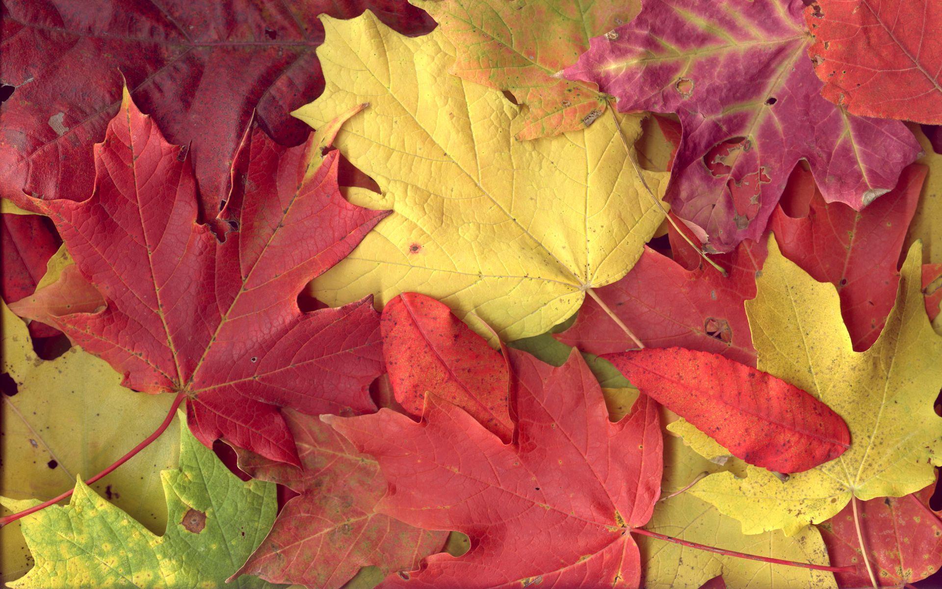 Colours Wallpaper Com Imagens Folhas De Outono Folhas Decor