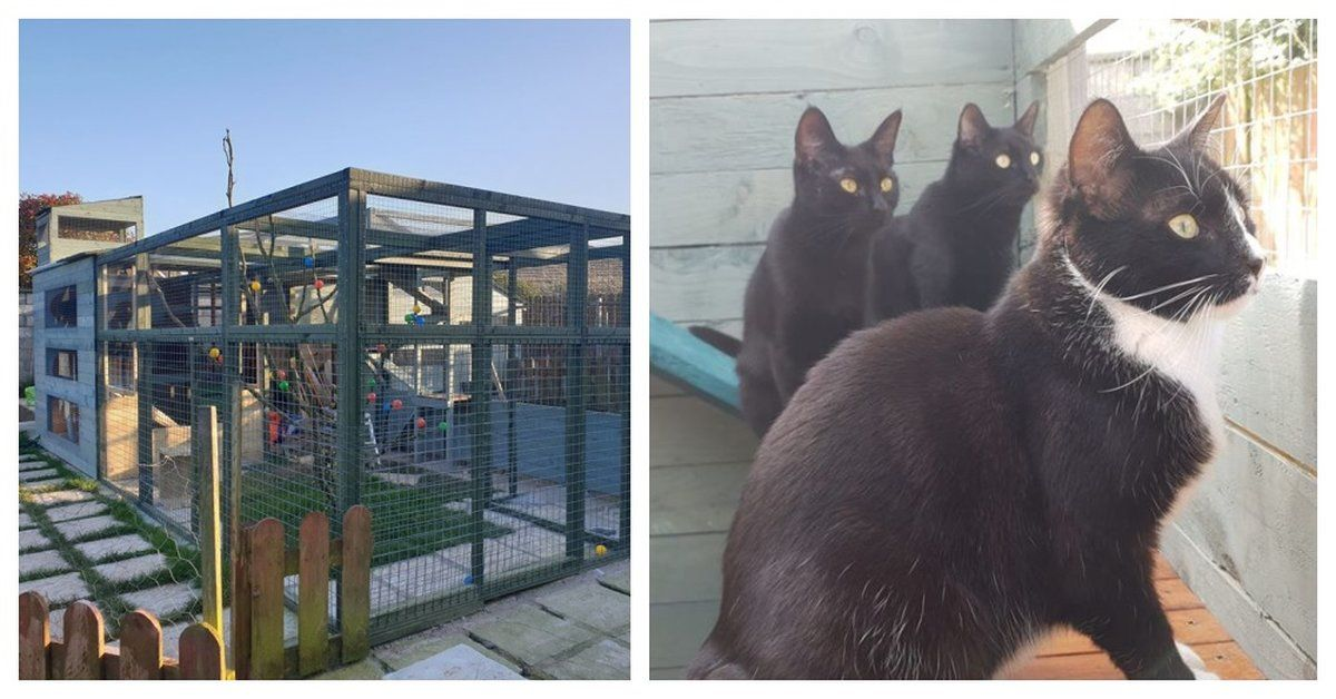 Man Builds Elaborate Outdoor Play Land For His Rescue Cats